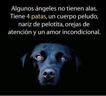 Potrillo_bmw